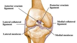 Anatomia-del-ginocchio-620x350